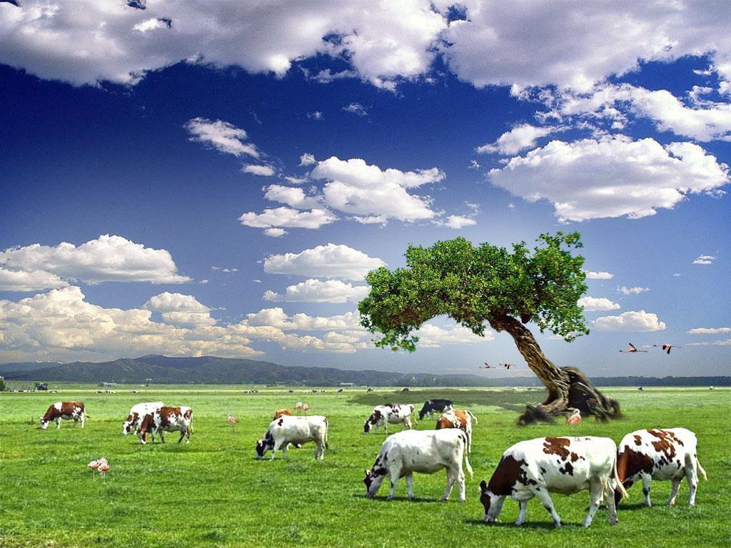بالصور تعبير عن البيئة الصالحة 12460