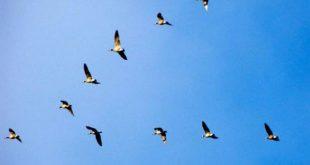 صوره البحث عن الطيور