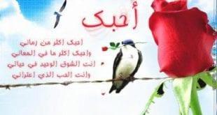 قصائد قصيره عن الحب