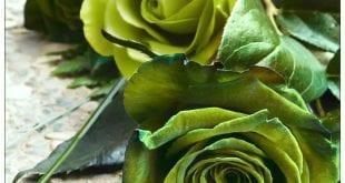 صوره صور الورد الاخضر