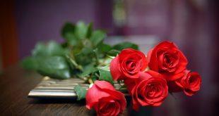 تفسير الاحلام الورد الاحمر , مبسوطه علشان حلمتى بورد تعرفى تفسيرة اى