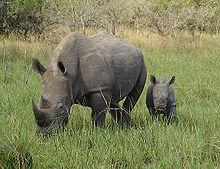 وصف حيوان وحيد القرن