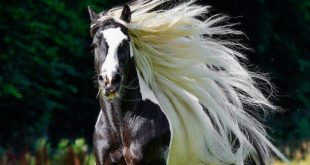 صوره يستطيع الحصان العيش بدون اكل لمدة