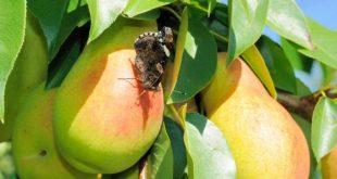 صور بحث عن الحشرات النافعة وفوائدها