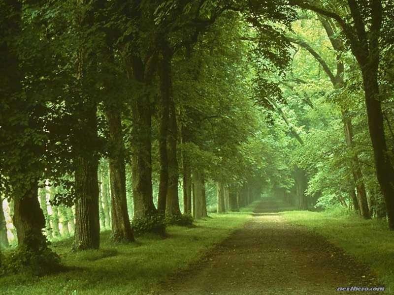 صور خلفيات الطبيعة الخلابة