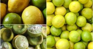 صوره رجيم الليمون