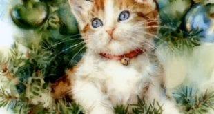 صوره طعام القطط الشيرازي