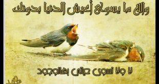 صوره كلمات اغنية والله مايسوى