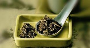 صور استخدام الشاي الاخضر