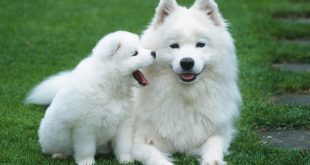 صور صورة كلاب