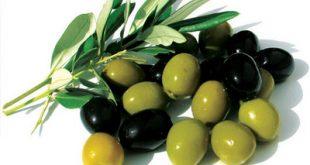 الزيتون الاخضر في المنام , تفسير حلم الزيتون الاخضر