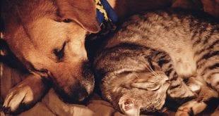 صوره هل الحيوانات تحلم , معلومه جديده