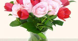 بالصور اجمل صور زهور 6d0b08e103cde5a9c9a8669ff3aac8ba 310x165