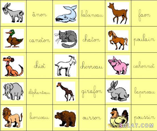 صوره تعليم اسماء الحيوانات للاطفال بالفرنسية