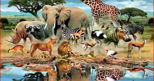 صوره الحيوانات في المنام لابن سيرين