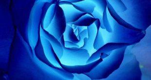حلم اللون الازرق , حلمتى باللون الازرق وعايزة تعرفى معناة اى هعرفك