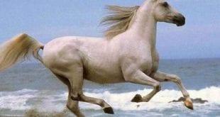 اسم انثى الحصان بالفرنسية