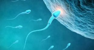 صورة الاغذية التي تساعد على الحمل