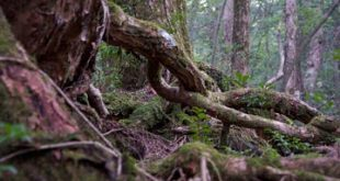 غابات مرعبة