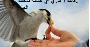 روايات سعوديه جريئه