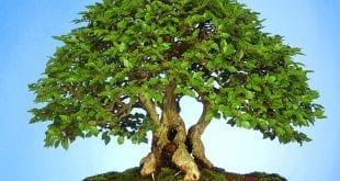 صورة نبات بحرف الالف