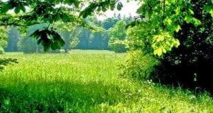 صورة رؤية العشب الاخضر في المنام