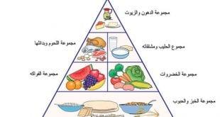 بالصور التغذية عند الانسان a81e495d79db80948148f0d49c0e9682 310x165