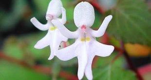 صوره انواع الازهار