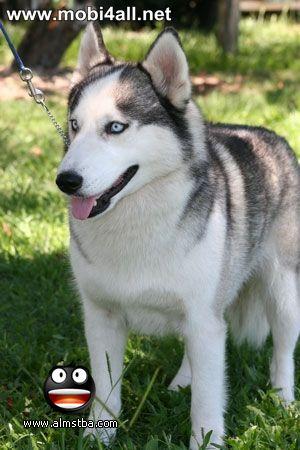 صور اجمل كلاب