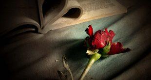 بالصور عشق وحب almstba.com 1347862013 211 310x165