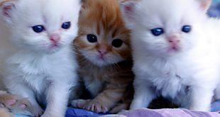 صورة صور للقطط الجميلة
