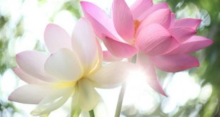 صور اروع الورود الطبيعيه