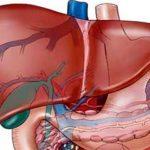 كيفية اذابة دهون الكبد