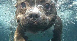 صور اجمل الصور تحت الماء