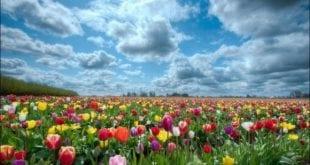 عالم الازهار