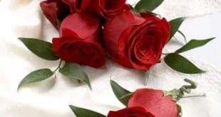 صور زهور وورود , اجمل الورد الزهور الحمراء