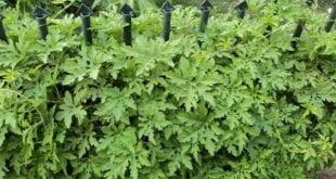صور صورة اعشاب جميلة , اتفرجى على صور اعشاب طبيعيه جميلة هتعجبك اوى