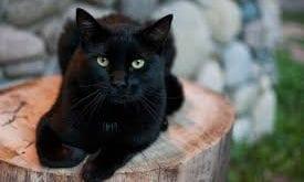 صور قطة سوداء بالحلم , حلمتى بقطه سودا و خايفة من الحلم هفسرهولك