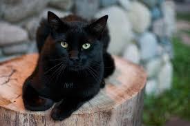 قطة سوداء بالحلم , حلمتى بقطه سودا و خايفة من الحلم هفسر هولك