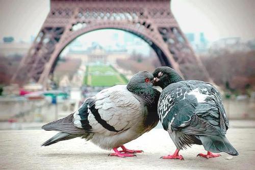 بالصور اجمل بل قل افضل ماستراه من الصور الرومانسية 3412 11