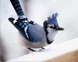 صورة حيوانات رائعة , صور جميله ورائعه للحيونات