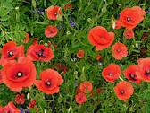 صوره صورة اعشاب جميلة