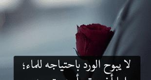 صورة احلى مسجات , اجمل مسجات الحب والرومانسية
