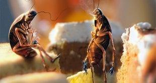 صورة كيفية القضاء على الصراصير , اسهل الطرق للتخلص من الصراصير