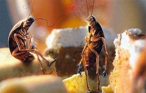 صور كيفية القضاء على الصراصير , اسهل الطرق للتخلص من الصراصير