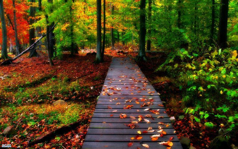 صوره صور جميلة وخلابة , من الطبيعة اجمل الصور الخلابة الرائعه