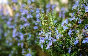 صورة صورة اعشاب جميلة , اتفرجى على صور اعشاب طبيعيه جميلة هتعجبك اوى